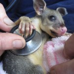 Southern Cross Wildlife Clinic