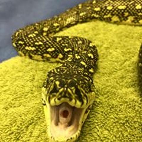 reptile-care.jpg